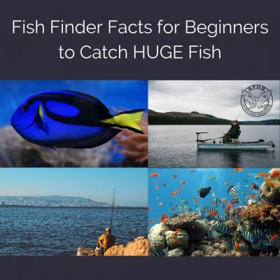 Fish Finder Facts for Beginners to Catch HUGE Fish