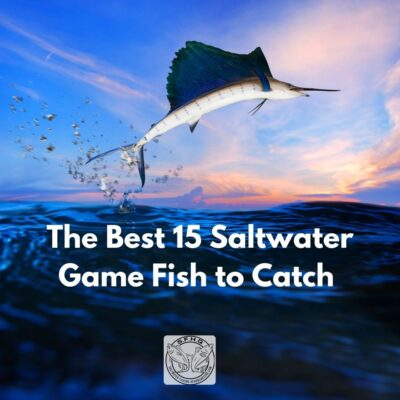 Image of a sailfish jumping out of the water. Text reads The Best 15 Saltwater Game Fish to Catch